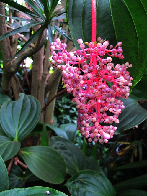 Exotic Flower 12