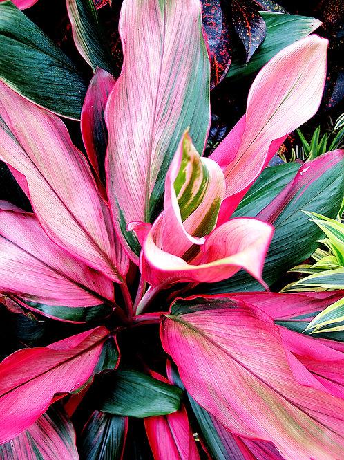 Exotic Flower 14
