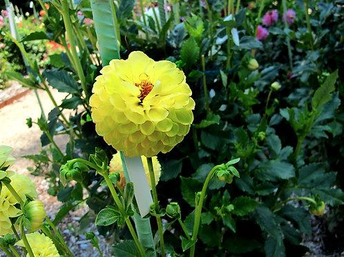Exotic Flower 30