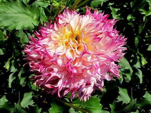 Exotic Flower 17