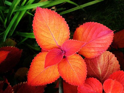 Exotic Flower 40
