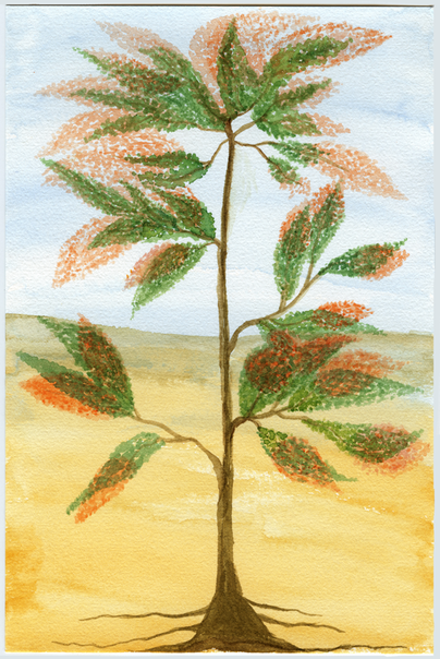 Water color-16.png