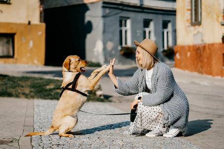 Quel rôle a le comportementaliste canin ?