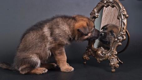 Chien miroir de mes  émotions