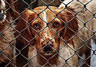 animal-welfare-1116205_960_720.jpg