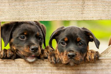 10 raisons d'adopter un chiot :