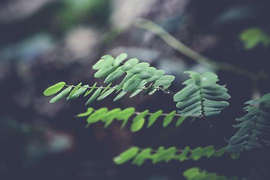 biology-blur-branch-close-up-239645.jpg