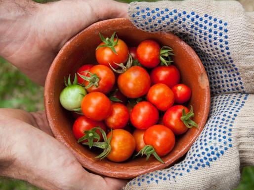 Qual será a cultivar do mês de Novembro?