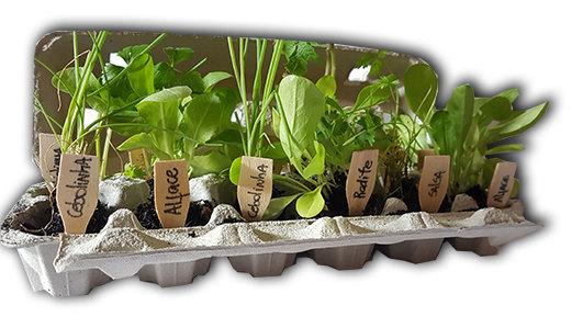Baby Planta Grupo 1 (Entrega apenas POA)