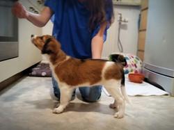 Bailey, 11 Wochen alt
