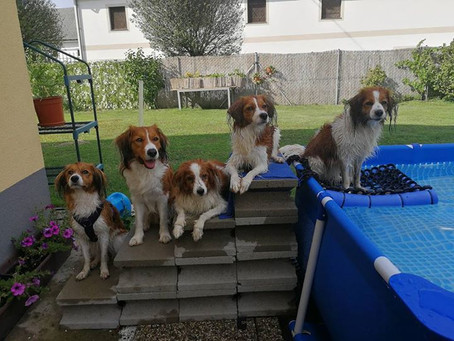Doggy-Pool-Party