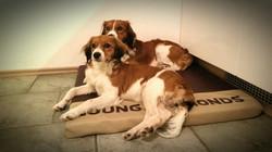 Bailey & Pike
