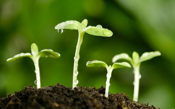 agricultura-sustentable.jpg