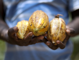 Ghana: Validating the Living Income Benchmark for cocoa growing regions