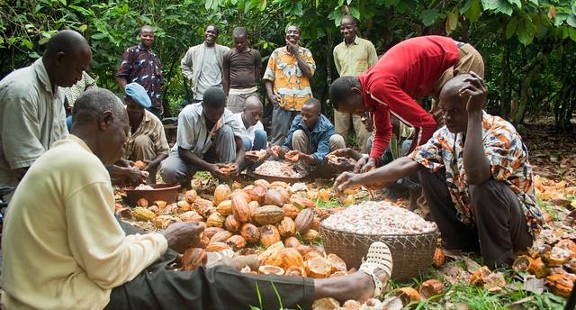 Cocoa farmer field school in Ivory Coast © UTZ Certified
