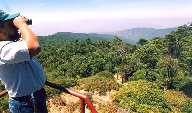 Photo © Forest Stewardship Council