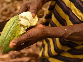 Study Launch Workshop - Calculating a Living Income benchmark for cocoa growing regions of Ghana
