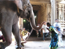 elephant-375_960_720