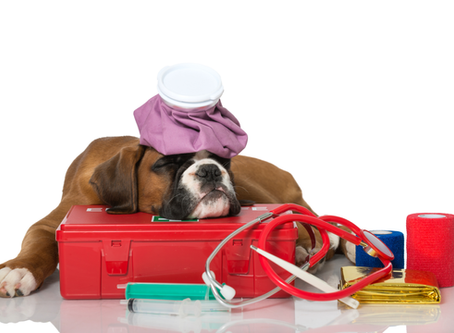 Knowing Pet Emergency Tips Could Save Your Pet!