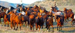 120109_HorsemansReUnion_484