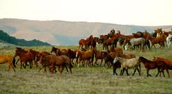 120108_HorsemansReUnion_023