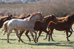 120110_HorsemansReUnion_155