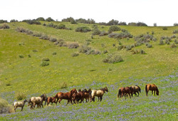 thumb_Colts in pasture_1024