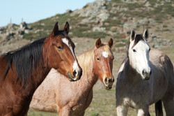 120110_HorsemansReUnion_131