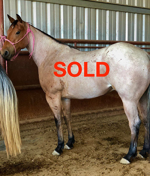 SOLD  Twissaroanie P57 (Twisselena x B57 PJ Musical Babe)