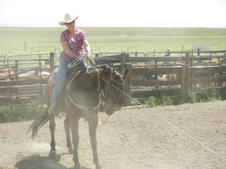 Branding On Sale Horses-Hiway Corrals  5-1-06 006