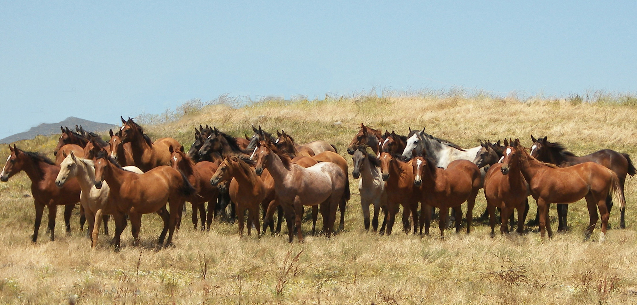 Colts in Field-Horsemen's Re-Union Photo 2012**+