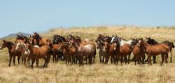 Colts in Field-Horsemen's Re-Union Photo 2012**+
