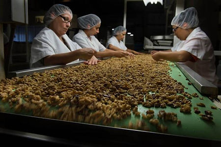 walnutwomenprocessing.JPG