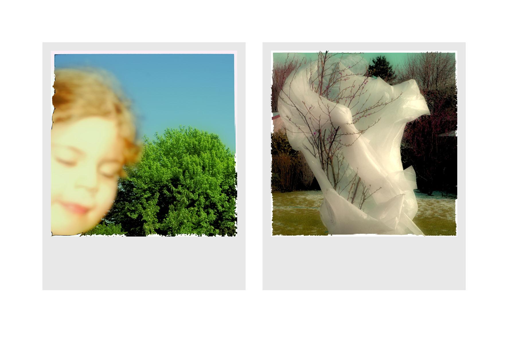 arbres+lisa+(1).jpg