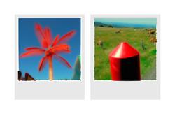 arbres+rouges.jpg
