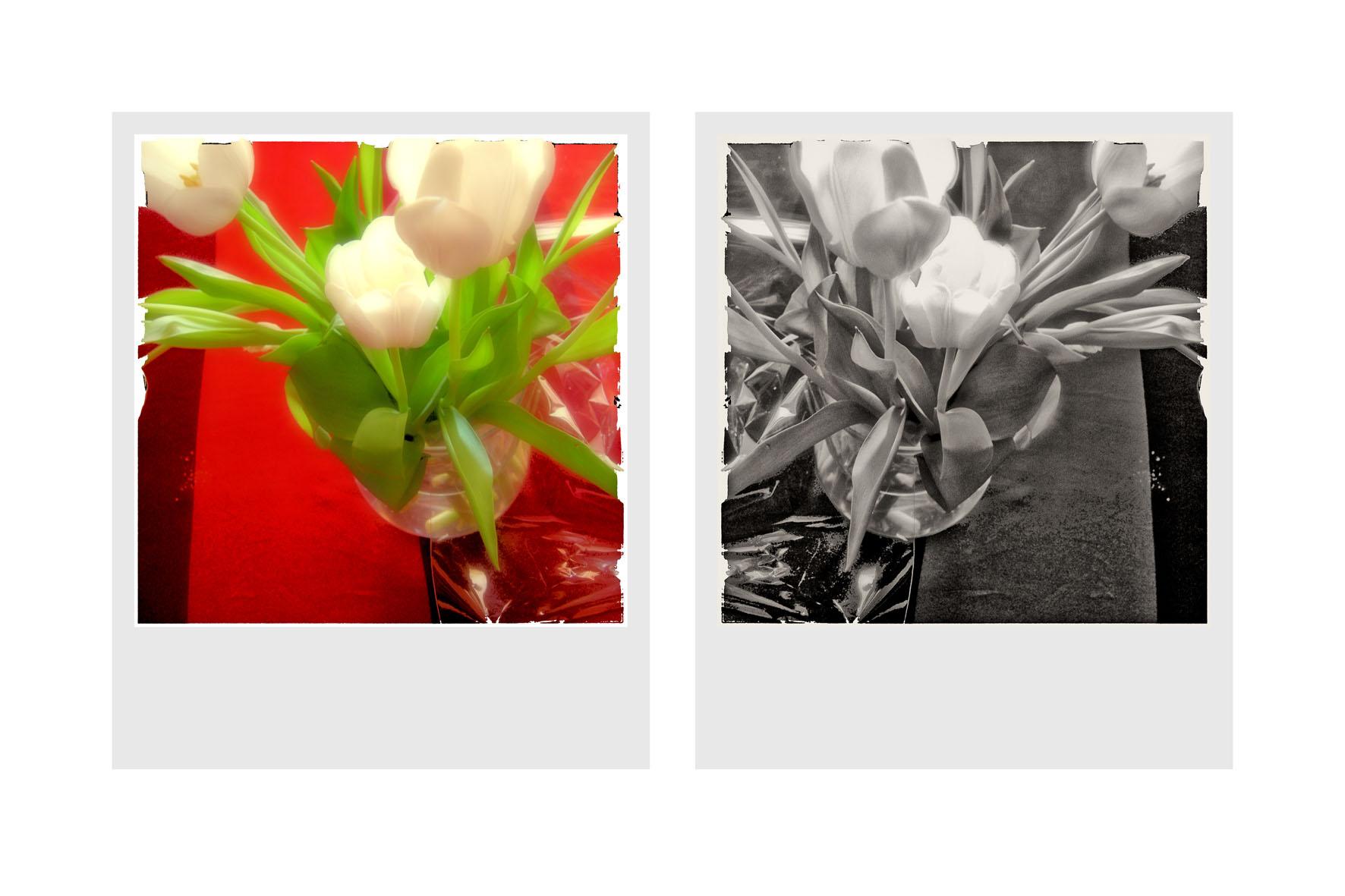 fleurs+netb.jpg