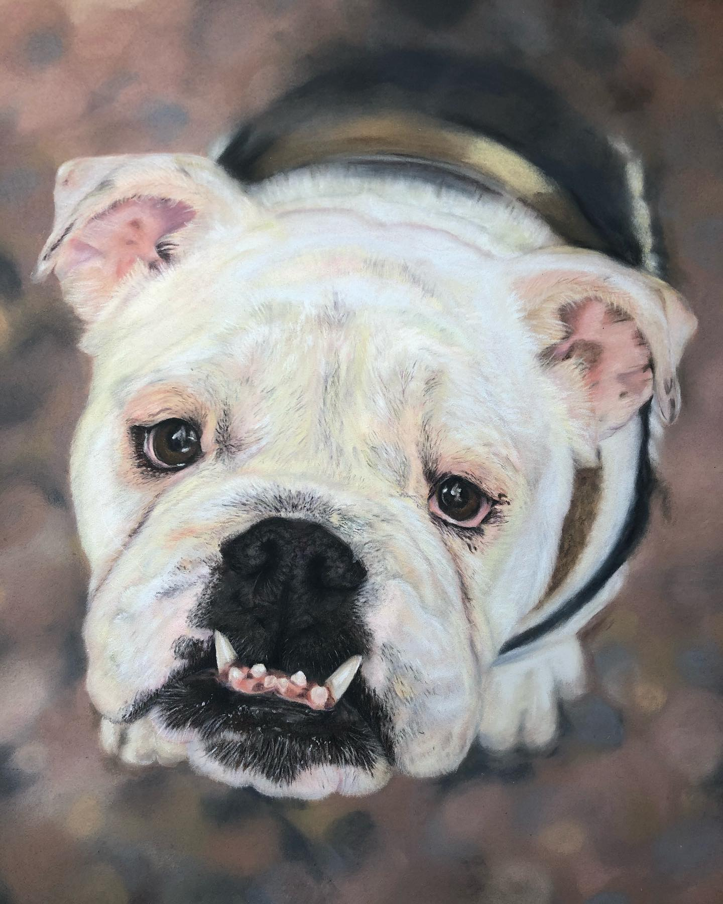 Bulldog Portait