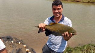 Seja bem-vindo à Associação Brasileira de Aquaponia (ABA)