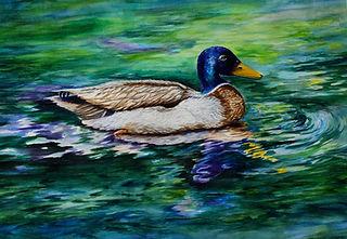 2 - Mallard Duck by Candace OBrien - wat