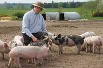 George with Pigs.jpg