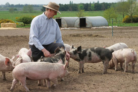 George with Pigs.jpg