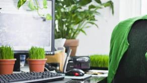 Running a carbon neutral business