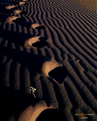 Huellas en las dunas de San Nicolás