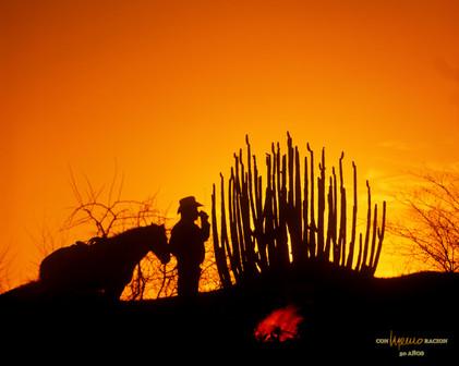 Vaquero descansando Rancho Teópari, Ures