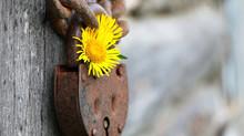 Le bonheur (dernier volet) et...histoire de clef