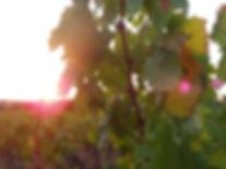 Le Clos de l'hirondelle - Vignobles Saint-Pierre