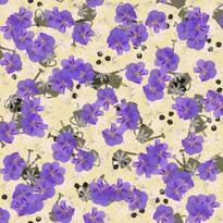 Hibiscus August Lemon Meringue 3000.jpg