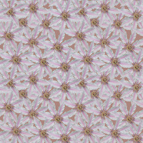 White Clematis Earthly Taupe 3000.jpg