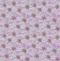 White Clematis Pink 3000.jpg