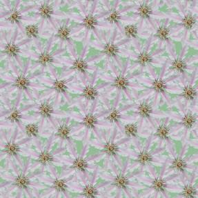 White Clematis Lichen Green 3000.jpg